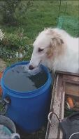 论狗喝水优雅与豪放