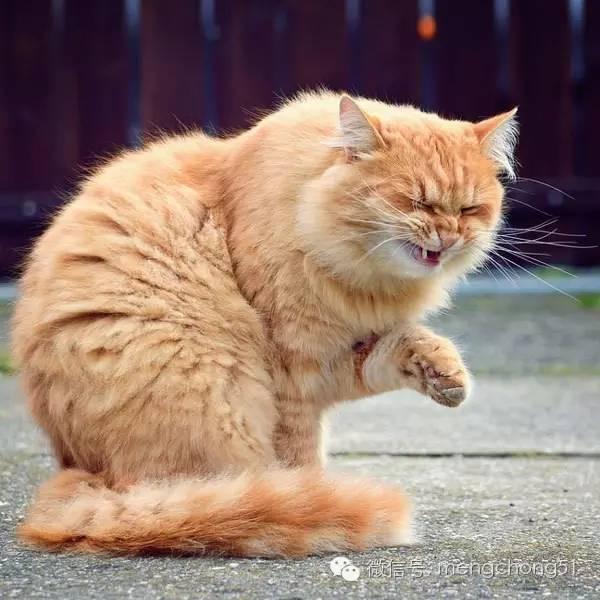 貓咪感冒打噴嚏流鼻水怎麼辦? - 每日頭條