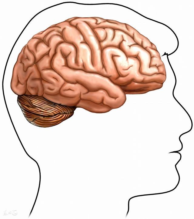 腦鳴治療第一療法通鳴清竅湯 - 每日頭條