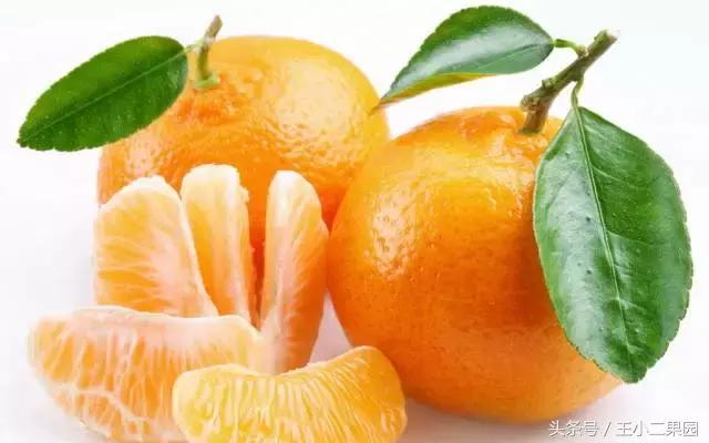 孕婦吃什麼水果最好?6種水果聖品你知道幾個? - 每日頭條
