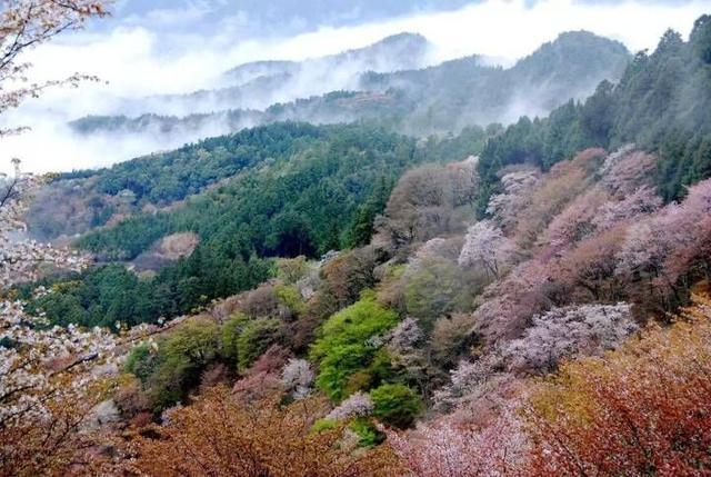 奈良吉野山。千本櫻。日本第一賞櫻名所 - 每日頭條