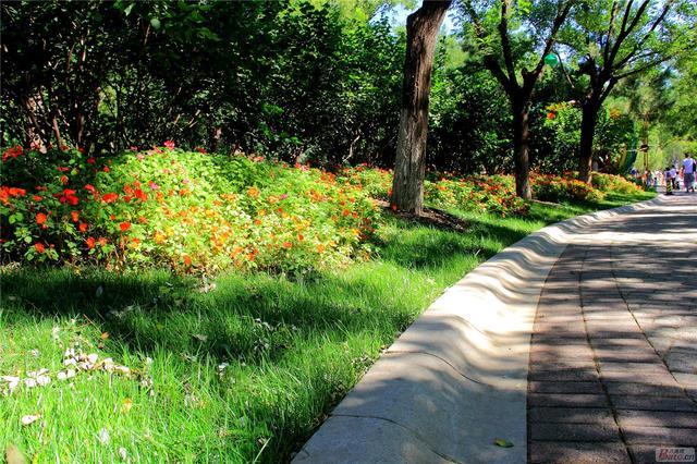 北京居民休閒好去處——大運河森林公園 - 每日頭條