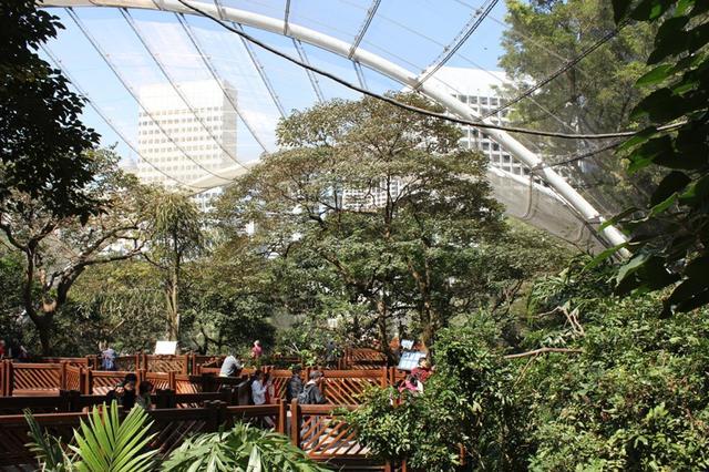香港遊記:石屎森林中的一塊翡翠——香港公園 - 每日頭條