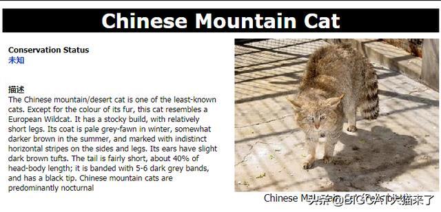 「山貓」是指哪種貓科動物?為何生活在雪山上的雪豹不叫山貓? - 每日頭條