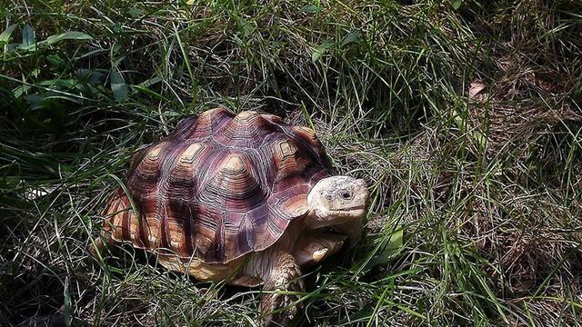 寵物龜的品種選擇及飼養方法 - 每日頭條