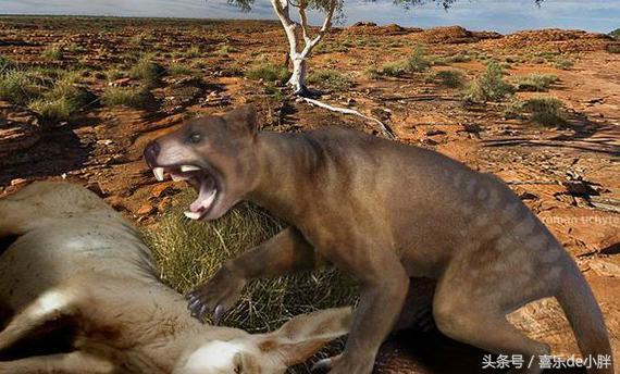 澳洲草原上曾經的頂級掠食者-袋獅 - 每日頭條