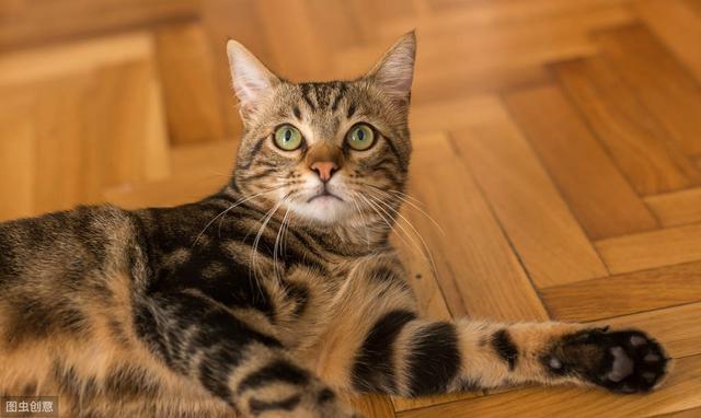 貓咪得了腸胃炎該怎麼辦?不要慌。科學治療和調理來幫你 - 每日頭條