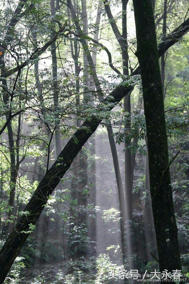 永春:森林陽光 - 每日頭條