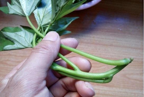 這種抗癌蔬菜太容易種了,一個水桶就能種出來,根本吃不完! - 每日頭條