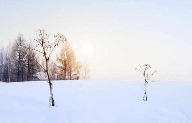 8首冬日詩詞。寫盡冬日之美:歲月寒涼。因你溫暖 - 每日頭條
