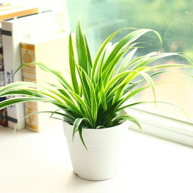 10種適合室內種植的植物!不止美觀還容易打理! - 每日頭條