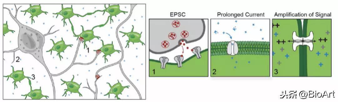 哈佛博士後解讀Nature長文——揭示突觸結構促進腫瘤生長的機制 - 每日頭條