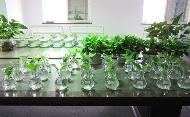 12種植物水培方法。想水培的進來看! - 每日頭條