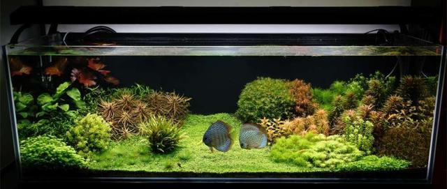 生態魚缸的水草概覽(入門篇) - 每日頭條