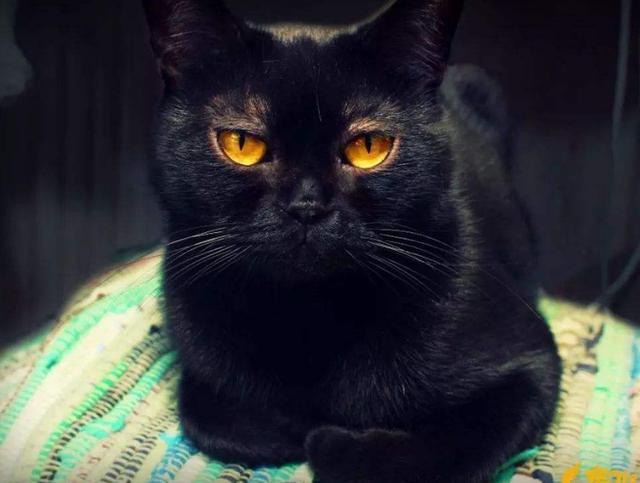 最「冷門」的六種貓咪,明明顏值很高,卻很少人養 - 每日頭條