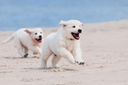 寵物狗狗為什麼會出現皮膚病。怎麼治? - 每日頭條