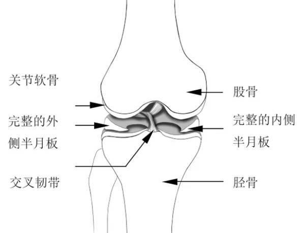 怎樣最大限度的防止膝蓋受傷? - 每日頭條