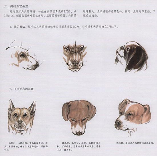 中國國畫中,700,你會發現這些狗很多著色,畫狗的步驟 - 每日頭條