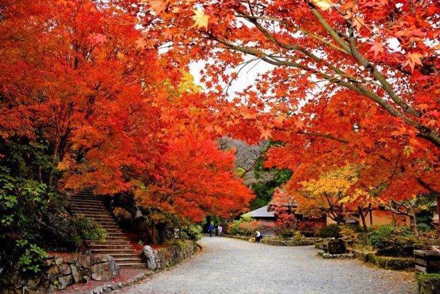 這 15 處九州名所才是日本人心中的賞楓秘境 - 每日頭條