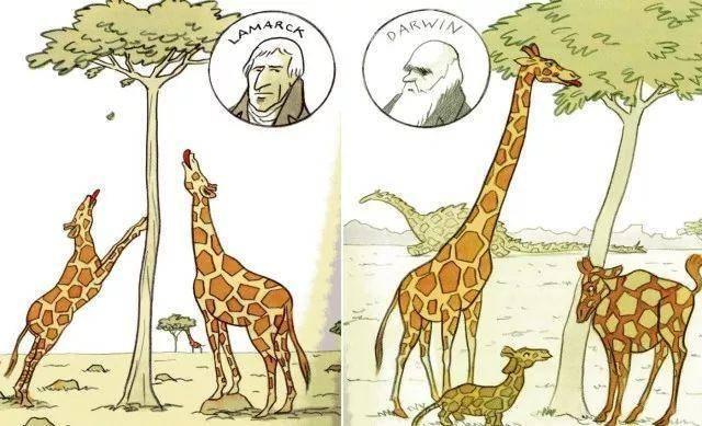 從用進廢退到自然選擇,談進化論 - 每日頭條