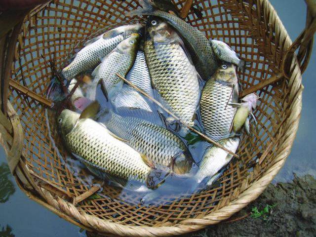 吃錯魚會傷身一輩子。這7種魚絕對不能吃!謹記這些挑魚小技巧 - 每日頭條