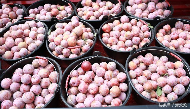 恐龍蛋!名字怪異的水果,群眾卻叫它「金蛋蛋」,每畝產量達1.5噸 - 每日頭條