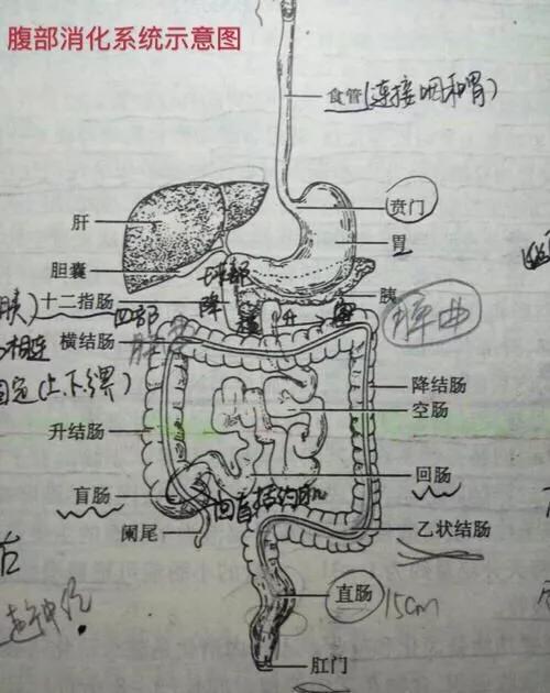 腹痛部位和對應臟器疾病 - 每日頭條