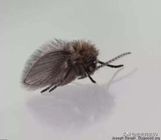如何快速消除廁所中的小飛蟲 - 每日頭條