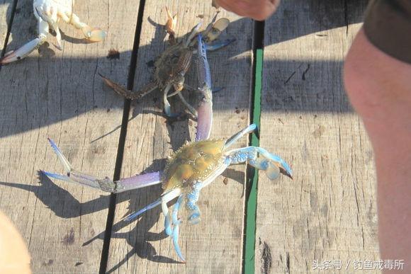 釣不到魚我就捉蟹,滿滿的海鮮收穫呀,順便公布秘方 - 每日頭條