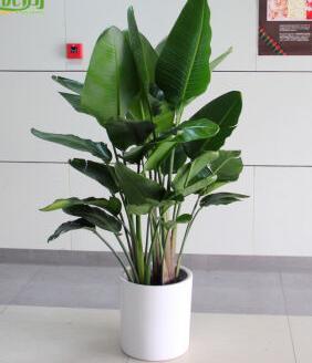 客廳擺放植物的風水禁忌 - 每日頭條