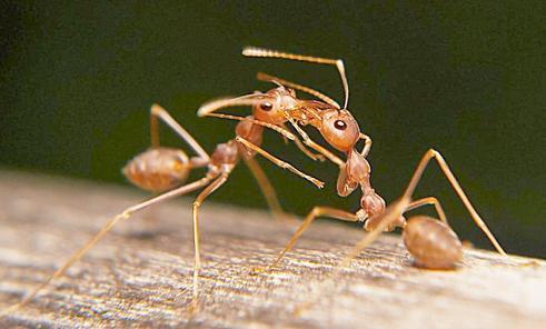 家裡有螞蟻怎麼回事 家裡有螞蟻怎麼辦能除根 - 每日頭條