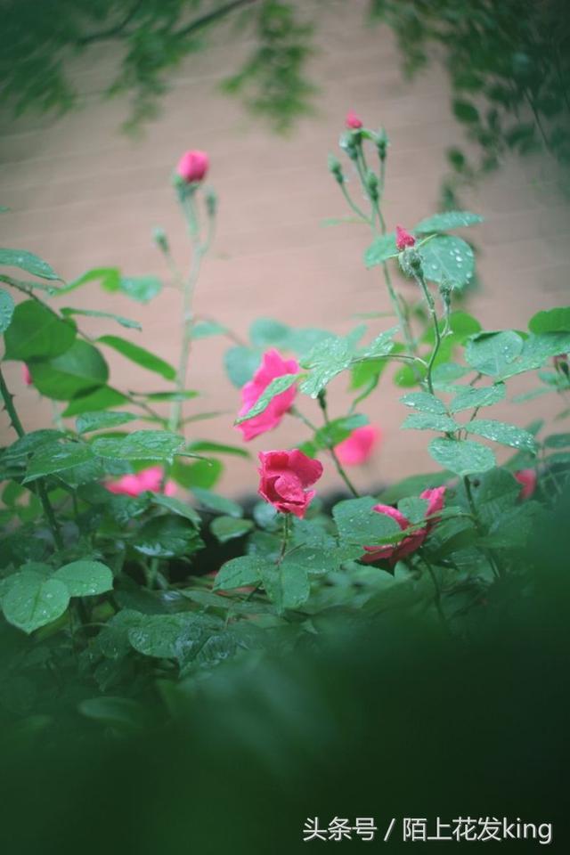 杏花雨,楊柳風,小雨淅瀝春意濃! - 每日頭條
