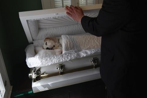 實拍寵物狗安樂死全過程,主人留下傷心的眼淚 - 每日頭條