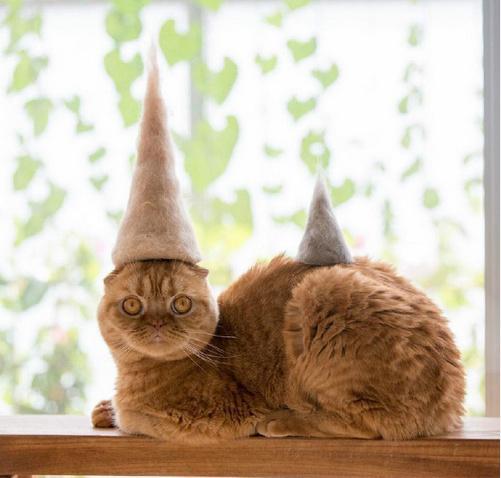這些貓咪帽子的材質你一定猜不到 - 每日頭條