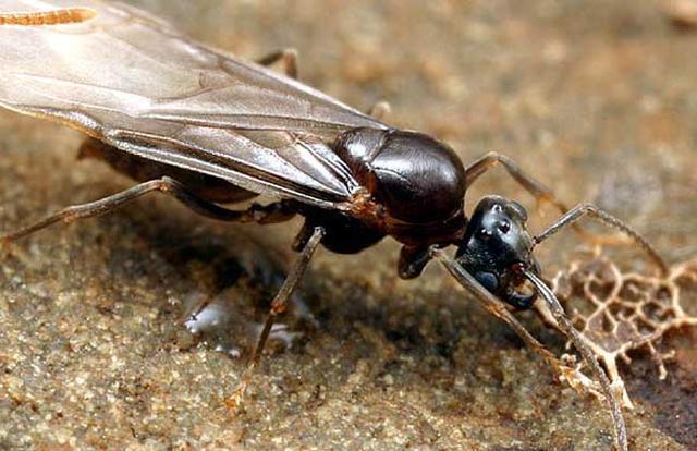 在某種意義上來講,螞蟻才是這個地球進化最完美的生物,沒有之一 - 每日頭條