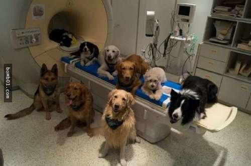 狗狗的7種常見行為。請理解它們。善待它們! - 每日頭條