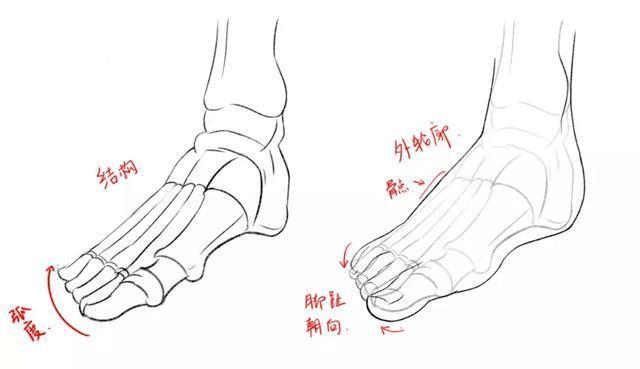 「推薦」繪畫初學者如何畫出腳部?最基礎的腳部結構入門繪畫教程 - 每日頭條