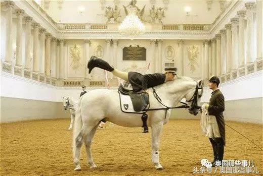 【維也納】西班牙皇家馬術學校,親臨巴洛克時期最高水平的騎術 - 每日頭條