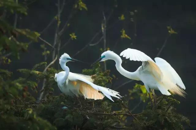 天下英雄城|最美南昌象山森林公園鷺鳥王國,攝影朋友們的天堂! - 每日頭條