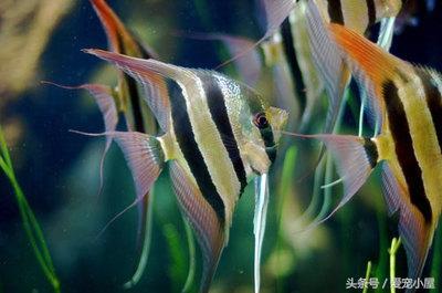 你有沒有見過這些魚?! - 每日頭條