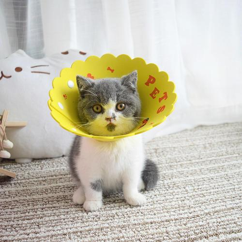 學會這4招,讓貓狗遠離寄生蟲 - 每日頭條