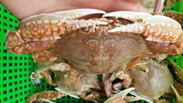 這些螃蟹你認識嗎? - 每日頭條