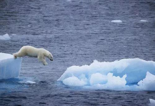 北極生物即將面臨大滅絕?冰層到底是罪魁禍首還是受害者? - 每日頭條