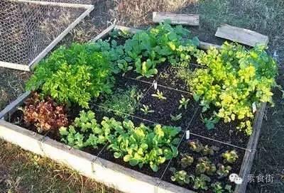 生機飲食「吃當地當季的蔬果」這是秘訣!  附: 時令菜一覽表 - 每日頭條