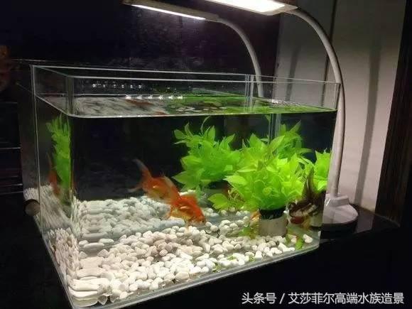 你養魚用玻璃缸?超白缸?看看牛人自製的魚缸! - 每日頭條