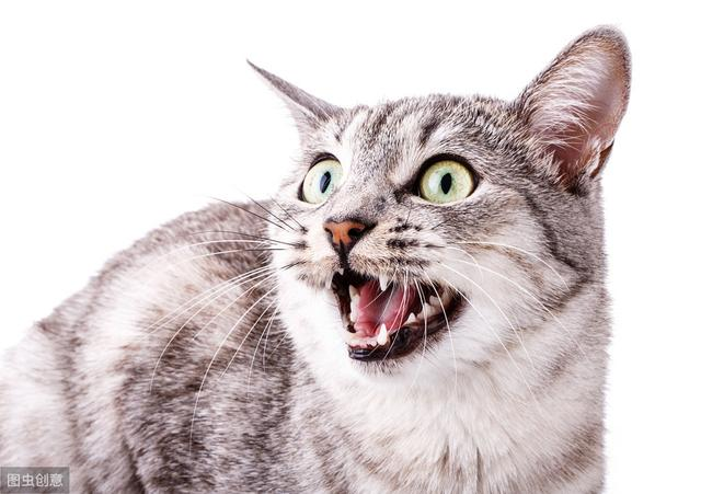 闢謠。貓也需要拔牙?拔牙也是無奈之舉。又該如何治療與預防 - 每日頭條