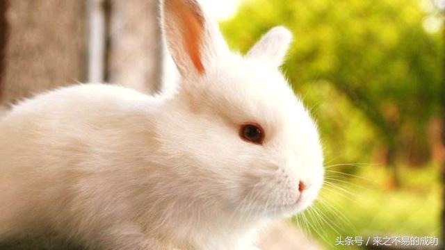 屬兔人最不配的屬相,注意你身邊有嗎? - 每日頭條