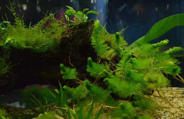 家居水景丨草缸造景水草種類圖片大全 - 每日頭條