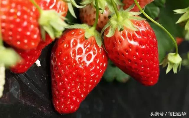 草莓可以保鮮貯藏多少天? - 每日頭條