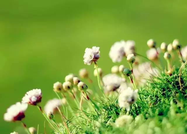 《生死是花》 - 每日頭條